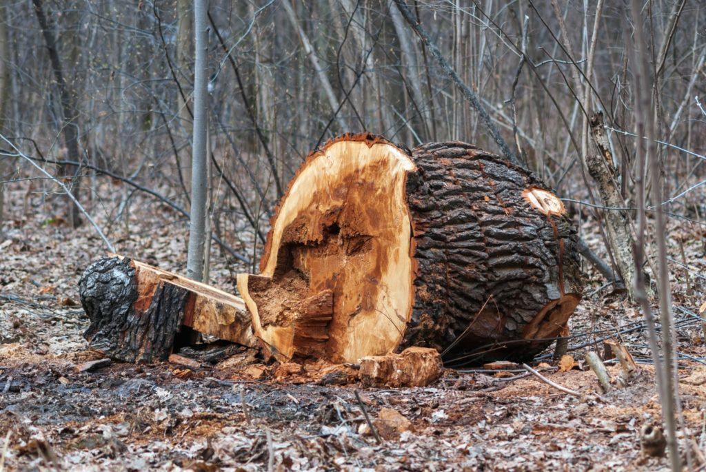 verwijderen van boomstronk