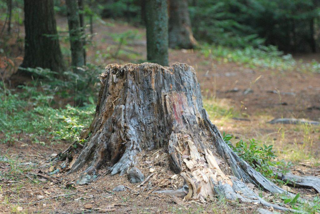 boomstronk laten verwijderen