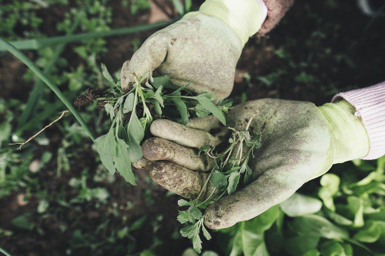 onderhouden tuin uitbesteden